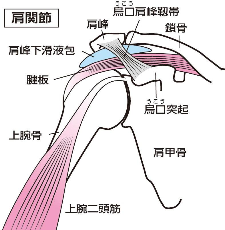 五十肩と似て非なるインピンジメント症候群 姿勢が大きく影響|医療ニュース トピックス|時事メディカル|時事通信の医療ニュースサイト